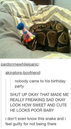 LET'S MAKE AN INTERNET PARTY FOR THIS SNAKE. THEN HE CAN SEE EVERYONE LOVES HIS CUTE SNAKEY FACE
