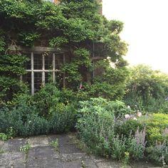 Land gardeners Wisteria