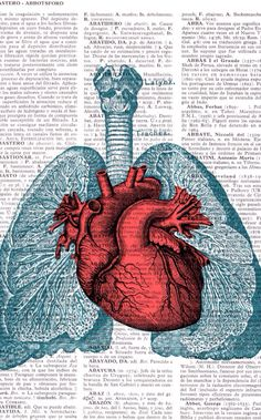 Heart and lung textures