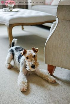 If we ever get a dog I want this one… hearthomemag.co.uk Issue 7 Sarah Cook by hearthomemag, via Flickr
