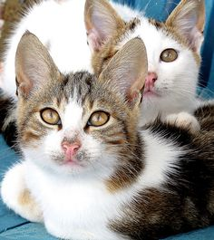 July 12 - Cute cat Friday