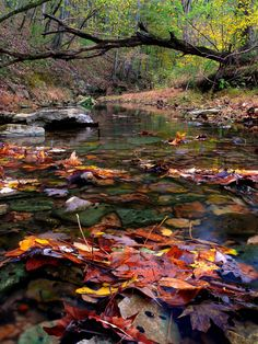 Streams of autumn leaves - Tennessee