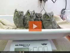 Please watch this.  Warning: you will prob squeal with the overwhelming feeling of cuteness