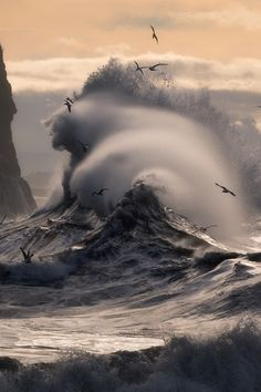 I captured this image at Cape Disappointment Washington during a high surf advisory in January of I loved how the birds were surfing the waves, and how angry the sea was that particular day. Sea And Ocean, Ocean Beach, Ocean Waves, Big Waves, No Wave, All Nature, Amazing Nature, Landscape Photography, Nature Photography
