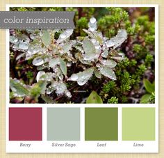 Pink and Green Color Palette 41 by Sarah Hearts Darker Grey, Green, Berry!  but missing my GOLD