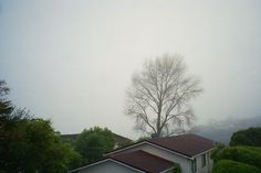 Tree and fog - Photo by Marion Jackson Photography