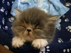 Sleepy Kitten - this will make your day even if you're not a cat person!