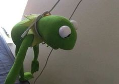 Jus gonna go Kermit suicide Frog Pictures, Funny Pictures, Sapo Kermit, Sapo Meme, Frog Meme, Xiuchen, Kermit The Frog, Just Friends, Reaction Pictures