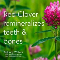 Some Tips, Tricks, And Methods For That Perfect natural herbs Oral Health, Health And Nutrition, Health And Wellness, Eyes Health, Bone Health, Health Tips, Teeth Health, Health Articles, Natural Medicine