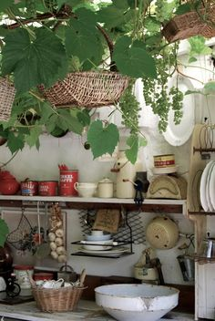 a kitchen with grapevines