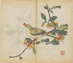 Oriole eating a cherry 1633