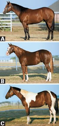 Judge These Yearlings' Conformation