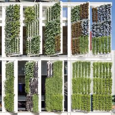 Brises vivos Facade, Outdoor Structures, Architecture, Green, Wall, Inspiration, Landscaping, Garden, Green Walls
