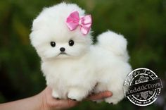 Dogs Items similar to Puppy Spitz Mimi (made to order) teddy dog , little Spitz , pomeranian Stuffed dog collectible Artist toy Portrait pet animal by photo on Etsy Tiny Puppies, Cute Little Puppies, Cute Little Animals, Cute Dogs And Puppies, Cute Funny Animals, Baby Dogs, Cute Babies, Boxer Puppies, Shitzu Puppies