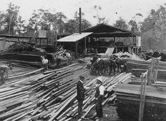 Description StateLibQld 1 151587 Sawmill in Kareewa, 1911.jpg