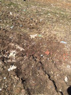 Trash and Dirt