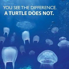 Ten percent of the plastic manufactured worldwide ends up in the ocean. often times sea turtles and other marine life mistake plastic debris as a delicious jellyfish causing death. Save Planet Earth, Save Our Earth, Save The Planet, Ocean Pollution, Plastic Pollution, Plastic Waste, Plastic Bags, Save Our Oceans, Marine Conservation