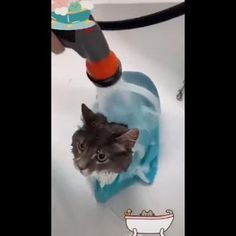 Funny Animal Videos, Cute Funny Animals, Cute Cats, Dog Snapchats, Animals And Pets, Baby Animals, Pet Loss Grief, Dog Grooming Shop, Beautiful Cats
