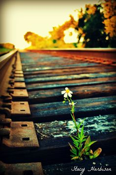 this flower was growing on the train track about 25 ft off of the ground..