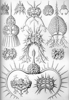100 Beautiful Illustrations of Biologist Ernst Haeckel - Art Forms of Nature Sea Life Art, Sea Art, Ernst Haeckel Art, Art Et Nature, Nature Drawing, Natural Form Art, Dibujos Tattoo, Nature Tattoos, Art Graphique