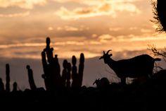 Biosfera del Desierto del Vizcaíno, Mulegé, B.C.S.