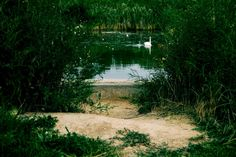 at the magical pond where the evil sorceress had hid herself beneath the waters A long time ago I sat there. Cambridge Ontario, Photo Location, How To Be Outgoing, Pond, Maps, Country Roads, Deviantart, Awesome, Water