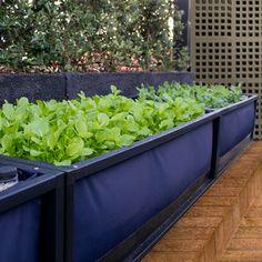 -A Floreira para Horta Caseira é um surpote desenvolvido com sistema de sub-irrigação integrado -Esta jardineira domiciliar é fácil de montar -A sementeira pode ser instalada em qualquer tipo de superfíce
