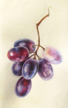 Colored Pencil Artwork, Color Pencil Art, Pencil Art Drawings, Realistic Drawings, Art Drawings Sketches, Colorful Drawings, Colored Pencils, L'art Du Fruit, Fruit Art