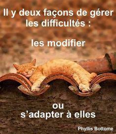 Image Citation, Vie Motivation, Amai, Funny Art, Zen, Humor, Words, Quotes, Bon Courage