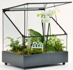 Live Plant Terrarium, Watering Free, Miniature Garden. No Green Thumb  Needed, Great Gift | Miniature, Orchids And Flasks