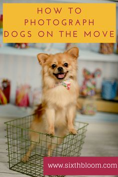 8 Tips to Photograph Dogs on the Move, Pet Photography, Pet Photographs, Animal Pictures, Photography Tips