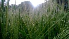 MY FARM MY HOPE