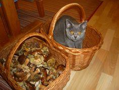 Ejmy chce taky na houby