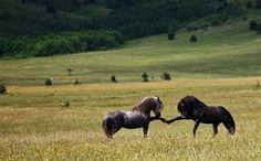 Hästar, speciellt om dom highfivear varandra.