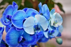 Discover orchid care secrets that most orchid growers never know about quickly and easily growing orchids. Orchid Flower Plant, Grass Flower, Orchid Plants, Flower Pots, Nature Plants, Flowers Nature, Exotic Flowers, Gardenias, Orchid Propagation
