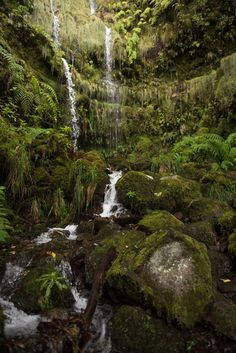 Madeira: Levada Wanderung zum Caldeirão Verde Funchal, Portugal, Algarve, Places Ive Been, Places To Go, Tropical, Tree Tops, Travel List, Water Features