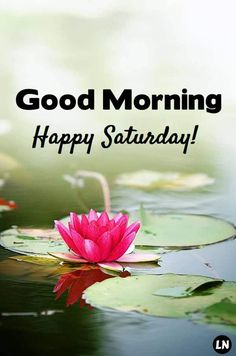 60 Good Morning Saturday Images with Beautiful Quotes – LittleNivi.Com Good Morning Saturday Wishes, Saturday Greetings, Good Morning Funny, Good Morning Picture, Good Morning Images, Happy Saturday Pictures, Happy Saturday Quotes, Happy Day Quotes, Morning Pictures