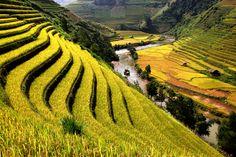Mooiste rijstvelden in Azie
