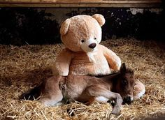 Cutest Cuddle Buddies Ever! - 24 Pics
