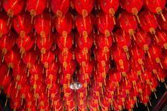 Many Lantans, Taipei Taiwan