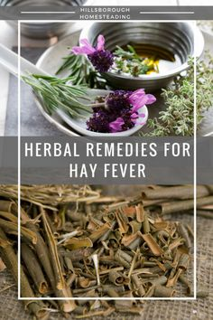 Holistic Health Remedies Herbal Remedies for Hay Fever. Be prepared this Summer! Easy ways to remedy a common summer ailment. - Spring and Fall bring allergies for some of us. Check out these 12 natural remedies for allergies before you run to the store. Natural Remedies For Allergies, Allergy Remedies, Cold Home Remedies, Cough Remedies, Natural Health Remedies, Herbal Remedies, Holistic Remedies, Natural Medicine, Herbal Medicine
