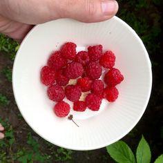 Bowl full of raspberries
