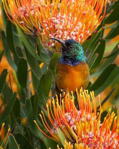 Flora and Fauna Pretty Birds, Love Birds, Beautiful Birds, Animals Beautiful, Exotic Birds, Colorful Birds, Especie Animal, Tier Fotos, Little Birds