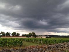 A summer storm brewing over Coutet! #Coutet #Barsac #Sauternes #Wine #Vin