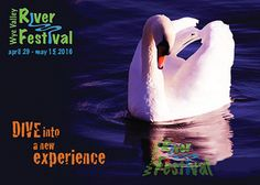 Wye Valley River Festival postcard. Swan on the River Wye