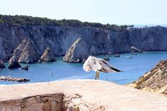"Tremiti Islands, in Gargano, Apulia: how to get and what to visit in the ""Pearls of Adriatic Sea"""