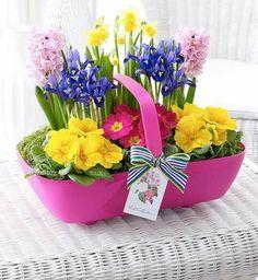 Easter Flower Arrangements, Flower Vases, Flower Pots, Floral Arrangements, Spring Plants, Spring Flowers, Fake Flowers, Beautiful Flowers, Primrose Plant