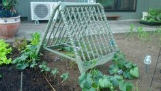 Cucumber trellis made from old crib