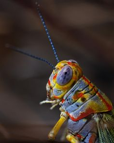 """grasshopper insect face"" - love the description! I know people like that."