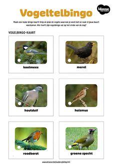 Vogeltelbingo – Klasse voor Ouders